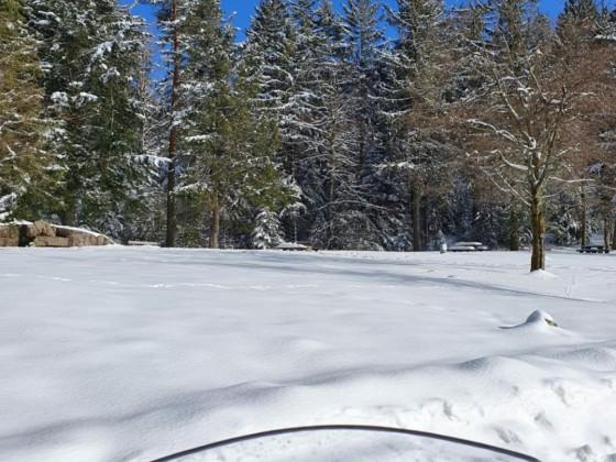 Heute Bühlerhöhe 1Grad und 60 cm Schnee